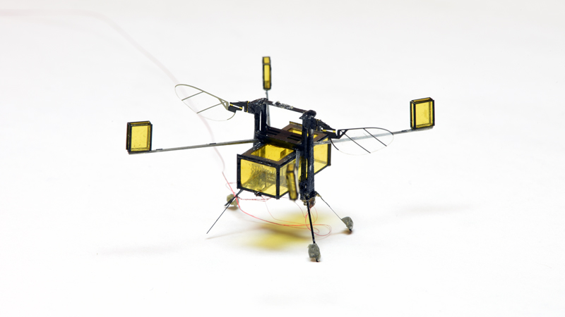 Tiny amphibious robot could aid in search and rescue missions