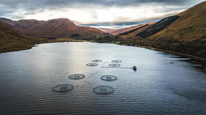 A Scottish salmon farm (Credit: Shutterstock)