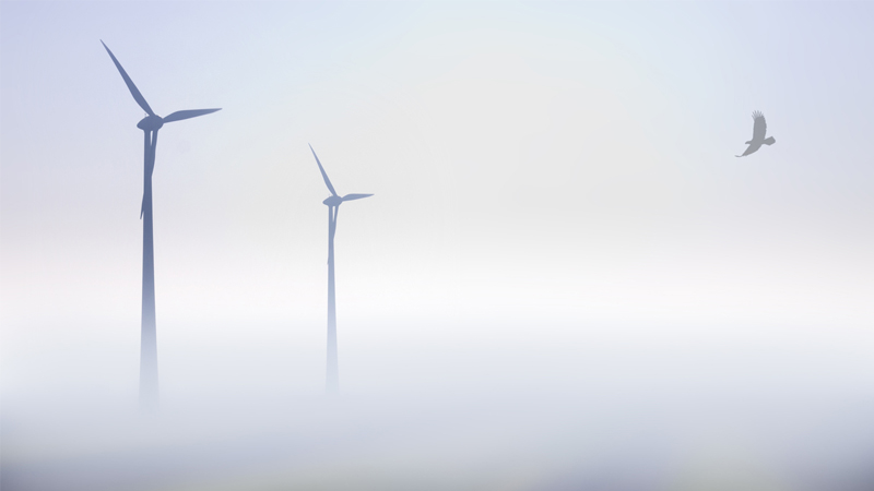 Detection system will make wind turbines safer for eaglesImage