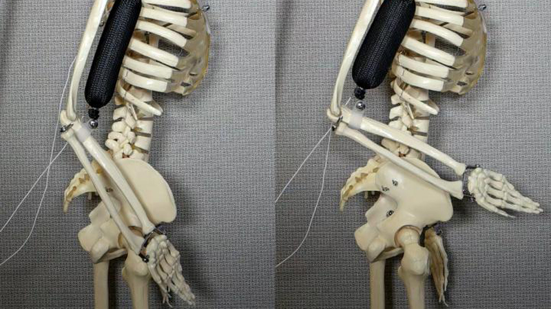 3D-printed soft robot muscles 'three times stronger than natural tissue'Image