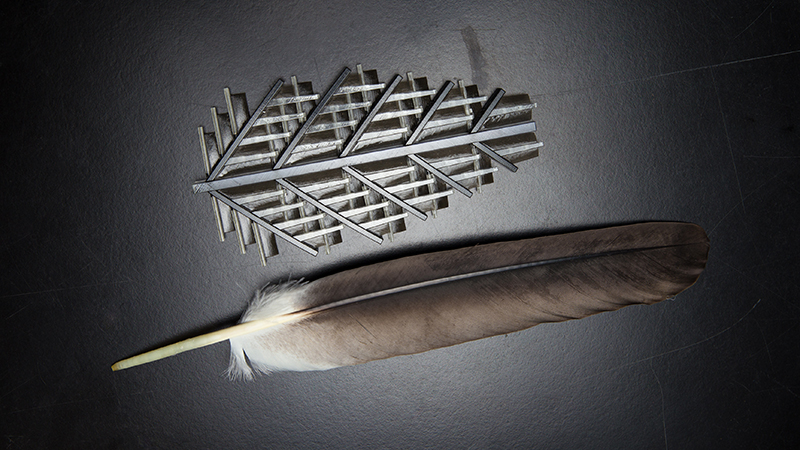 'Zipping' mechanism that keeps feathers unruffled could lead to aerospace materialsImage