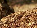 Biomass_thum