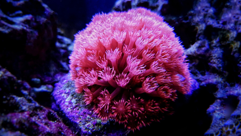 Robotic coral removes contaminants from water  Image